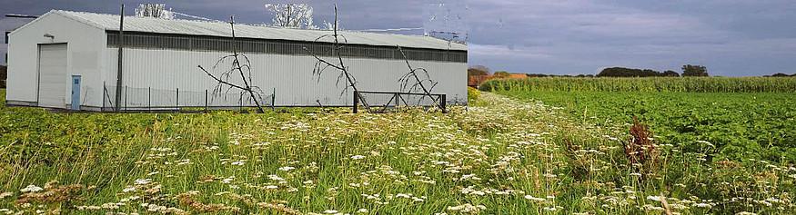 Michelin möchte seine Lagerhallen in einem Naturschutzgebiet erweitern